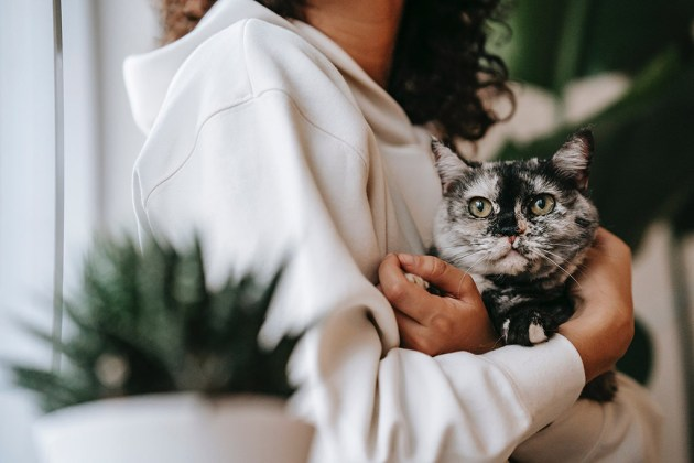 Mehr Kontakt mit Katzen