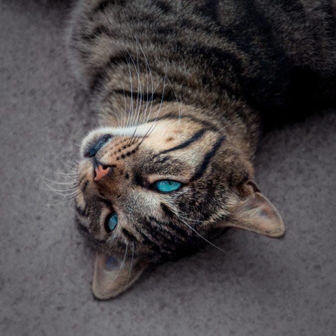 Katzen hassen diese Dinge