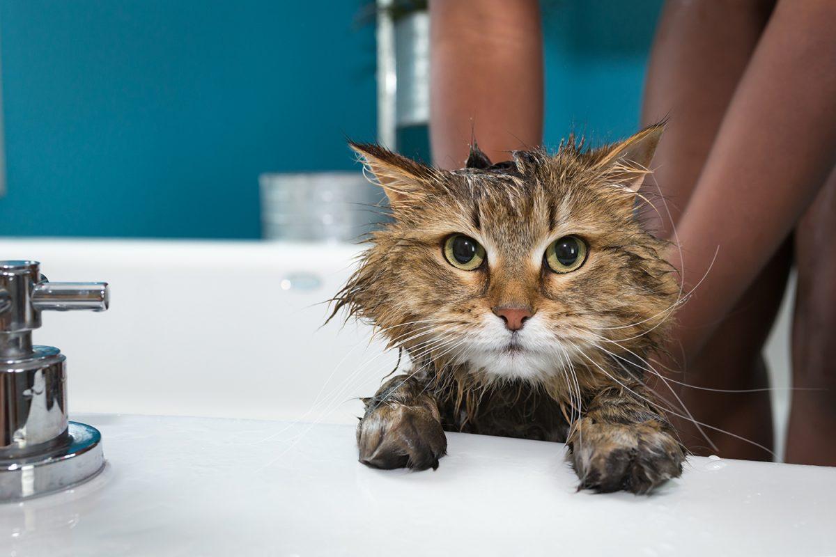 Bannerbild für Blogbeitrag: Sollte ich meine Katze baden?