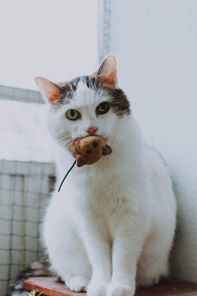 Katze spielt mit Stoffmaus