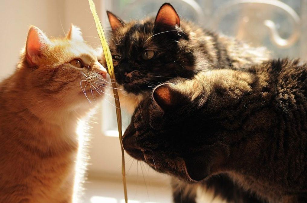 Katzen-zusammenführen-2