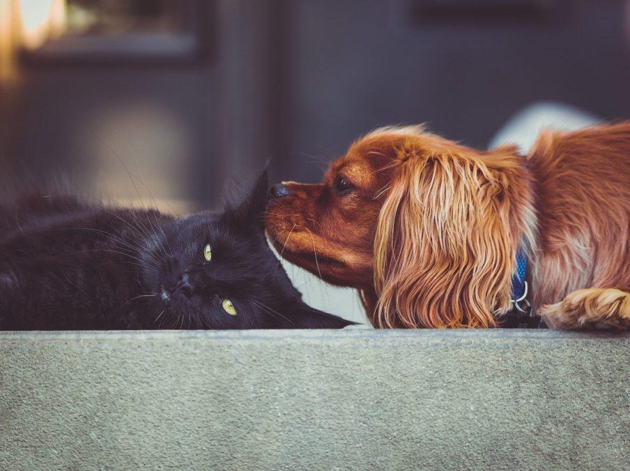 Hat meine Katze Angst vor Hunden?