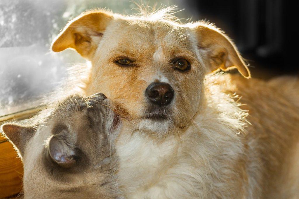 Katzen und Hunde leben in vielen Haushalten zusammen.