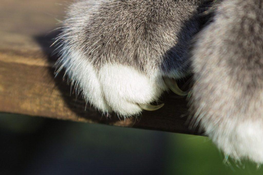 Katzenpflege: Soll ich meiner Katze die Krallen schneiden?